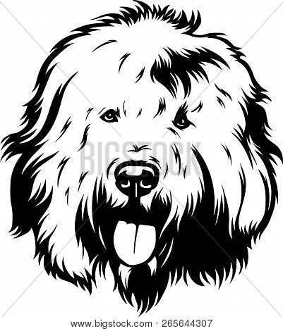 Animal Dog Old English Sheepdog 5T6Y.eps
