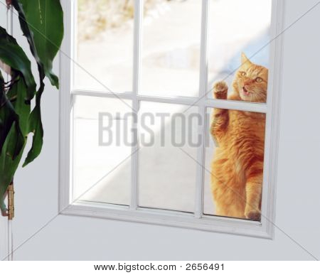 Cat Knocker