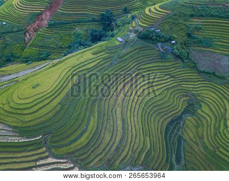 Vietnam Landscapes With Terraces Rice Field. Rice Fields On Terraced Of Sapa, Lao Cai. Royalty High-