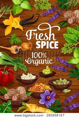 Spices And Herbs Or Organic Seasonings Poster. Vector Design Of Wasabi, Garlic Or Nutmeg And Poppy S