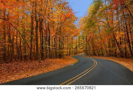 Beautiful autumn foliage at its peak