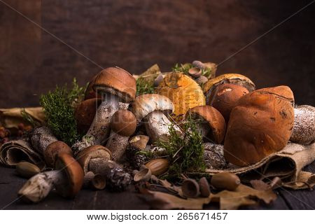 Ceps Mushroom Boletus Over Wooden Background. Autumn Boletus Edulis Mushrooms  On Wood Rustic Table.