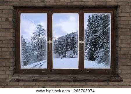Window Old Wood Window Frame Sprouts Winter Christmas