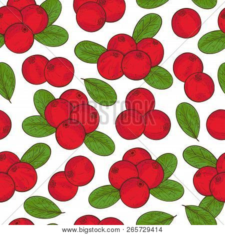 Cranberry. Berry, Leaves. Background, Wallpaper, Seamless, Texture. Sketch. Color.