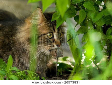 Cute cat with gray mouse. Close-up, outdoor.