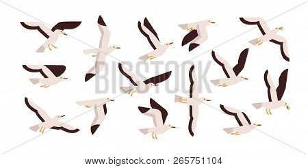 Collection Of Graceful Flying Seagulls Isolated On White Background. Set Of Ascending, Descending An