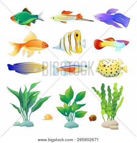 Snail And Fish Specie Aquarium Inhabitant. Decorative Seaweed Variegation Colored Cartoon Vector Ill