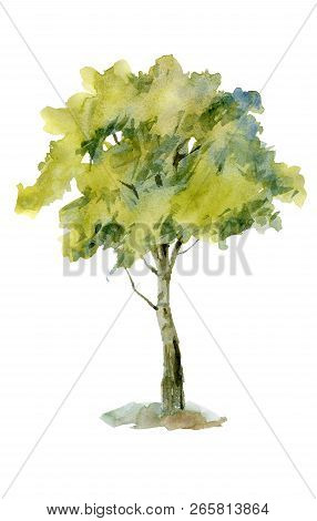 One Tree Isolated From The Background Sketch