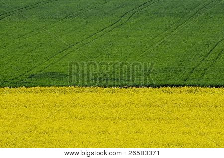 Aerial View Of Yellow Rapeseed Field In Front Of Green Crop Field