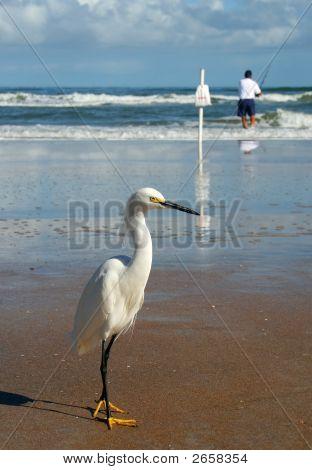 Bird Waiting For A Catch