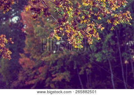Autumn Brown Nature Scene With Yellow And Brown Leaves