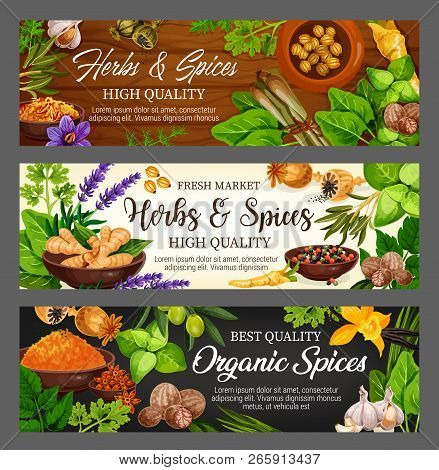 Spices, Herbs And Vegetable Greens, Food Seasonings, Condiments. Vector Parsley, Mint And Garlic, Pe