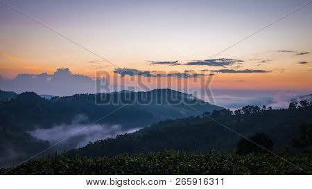 Sunrise In Mountain At Doi Mae Salong Mae Fah Luang, Chiang Rai Thailand. Panorama Landscape.
