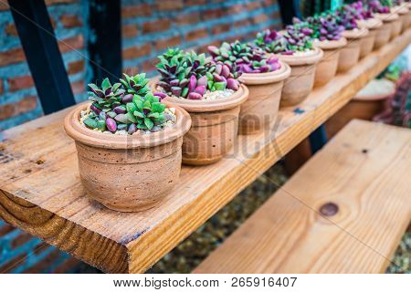 Row Of Small Tree In Beautiful Pot Decorate On Wood Shelf With Brown Brick Wall Background.