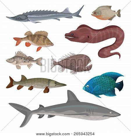 Flat Vector Set Of Different Predatory Fishes. Marine Creatures. Sea And Ocean Life Theme