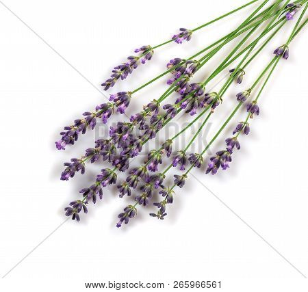 Fresh Beautiful Branches Of Fragrant Lavender Isolated On White Background