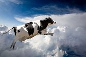 A super cow flying over clouds - cow in flight poster