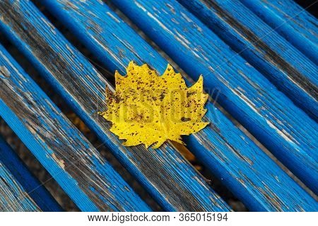 Autumn Bright Yellow Leaf On A Bench With Sunlight. Old Blue Bench And On It A Yellow Sheet With Dro