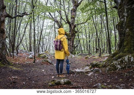 Woman In Forest Nature In Vacation. Woman In Nature. Green Forest Nature. Vacation. Natural Environm