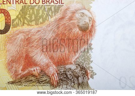 Golden Lion Tamarin A Portrait From Brazilian Money