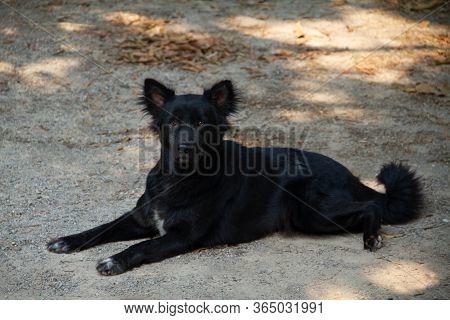 Black Dog Lying On The Floor  Legs Splayed