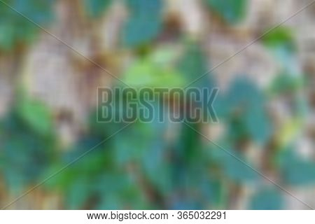 Green Leaves Blurred Background And Texture Image