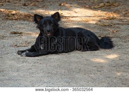 Black Dog Sitting On The Ground Looking