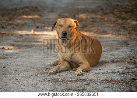 A Brown Dog Sitting With Eyes Closed On The Ground