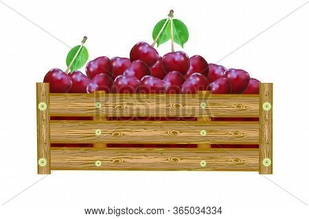 Cherries In Box Isolated On White Background. Crate Of Juicy Berries. Eco Farm, Market, Transportati