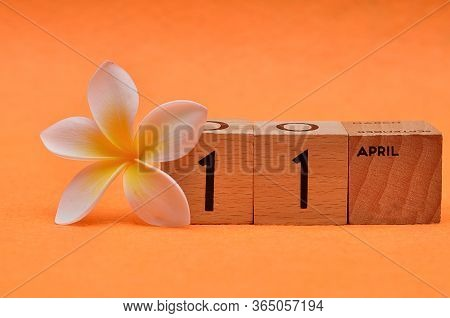 11 April On Wooden Blocks With A Frangipani Flower On An Orange Background