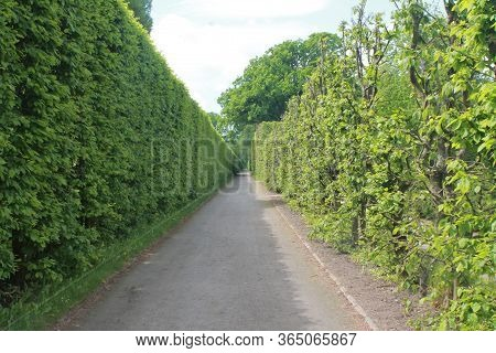 An Alley A Path In The Park A Line Of Clipped Bushes And Spherical Domes
