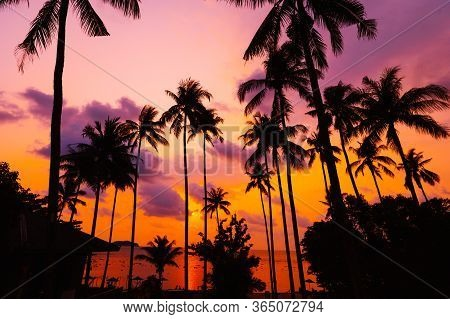 Silhouette Tropical Palm Tree With Sun Light On Sunset Sky. Summer Vacation And Nature Travel Advent
