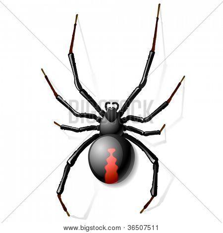 Black Widow spider. Vector.