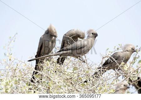 Go Away Bird On A Bush