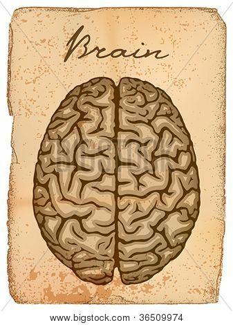 Human brain, old manuscript with illustration. Vector format EPS 10, CMYK.