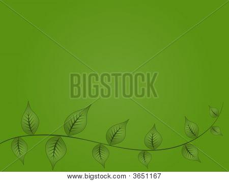 Green Vine Background