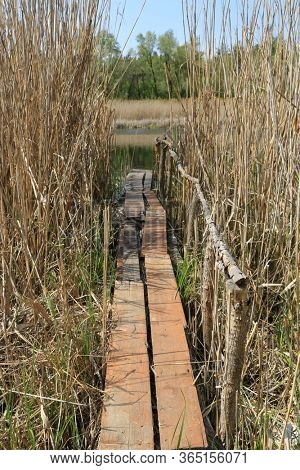 wooden walkways among thickets of reeds on the river