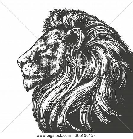 Animal Lion, King Of Beasts, Hand Drawn Vector Illustration Realistic Sketch