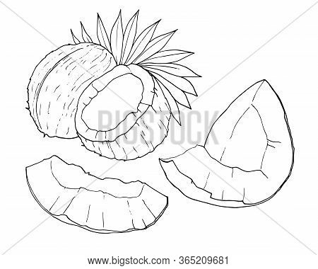 Coconut Outline Isolated On White Background, Hand Drawn Vector Illustration. Set Of Whole, Half, Pi