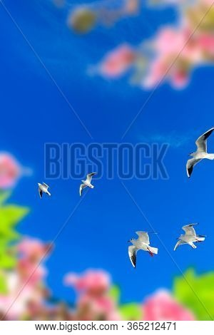 flock of seagulls flying over sunny blue sky with spring flowers