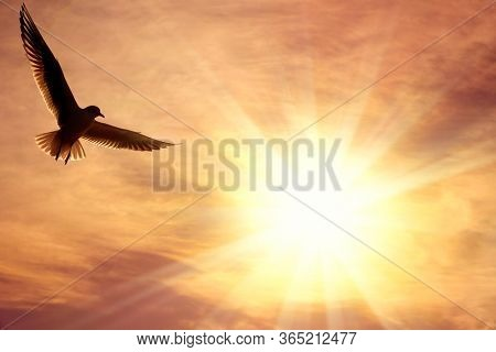 one flying seagull over cloudy sky with glowing sun