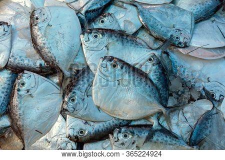 Razor moonfish (mene maculata) raw fish on market, background