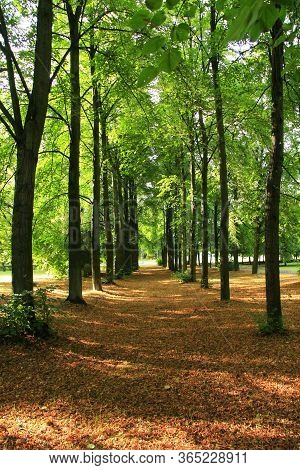 Summer Park With Pathway Covered By Dry Leaves Between Green Trees. Summer Landscape With City Park.