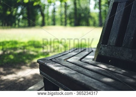 Wooden Bench Near A Tall Tree. Bench In The Park On A Summer Day. Wooden Bench On The Green Grass