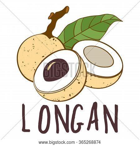 Vector Logo Of Longan Fruit Isolated On White Background. Botanical Illustration For Menu, Market, L