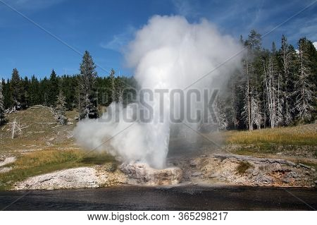View Of Grand Geyser Erupting In Yellowstone
