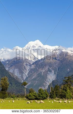 Portrait Of Mount Cook. Southern Alps Of New Zealand. South Island.