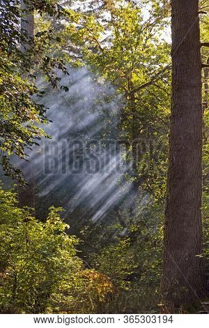 Sunlight Catching The Misty Forest Air In Del Norte Coastal Redwoods State Park In California