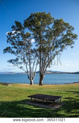 Large Eucalyptus Gum Trees Stand Beside River Lake In Grass Parklands Against Blue Sky