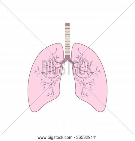 Human Lung Anatomy. Respiratory Tract Disease. Respiratory Systems. Vector Illustration